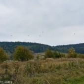 Jesienny Mieroszów Paragliding fly, Zapowiada się dobrze.