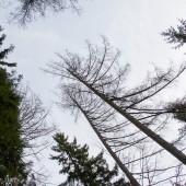 Kolejne drzewo na Mieroszowie, Na szczycie tych dwóch drzew zawisł mój Cayenne.