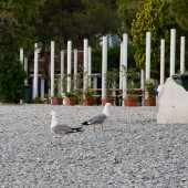 Bieliki nad włoskim morzem., Sistiana plaża.