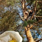 Moje pierwsze drzewo, Jarek to profesjonalista, skrzydło całe, bez zadrapań.