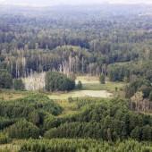 Las zniszczony przez ptaki
