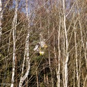 Sesja Cayenne na drzewie.