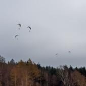 Jesienne latanie i zawody na celność.
