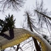 Kolejne drzewo na Mieroszowie, Winda w dół miała dobre 10, a może i 15 metrów.
