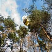 Moje pierwsze drzewo, Sesja Cayenne na drzewie.