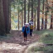 Ścieżką przez las ...